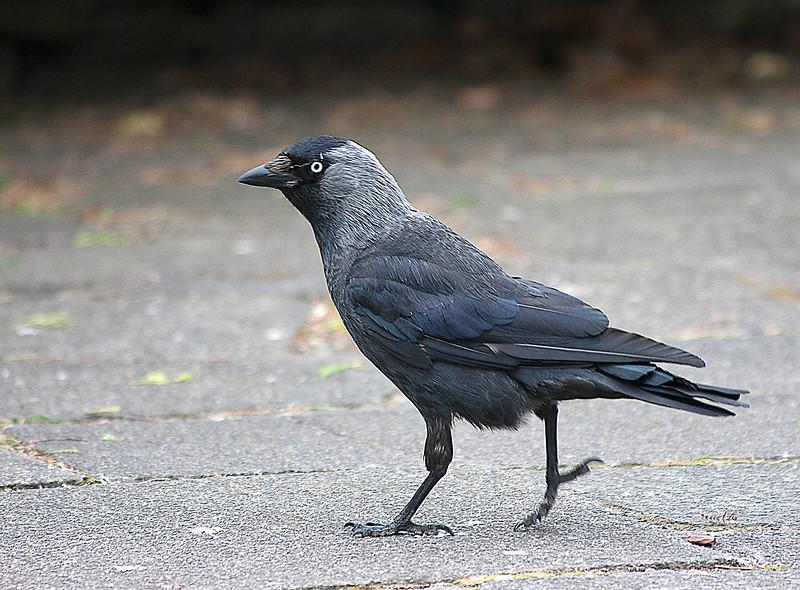 bird 093.jpg
