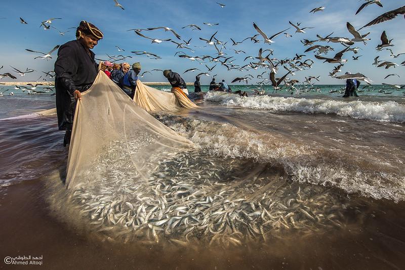 Sardine Season (57).jpg