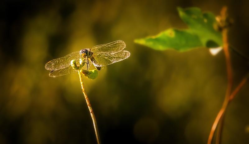 Ugly Bugs&Beautiful Beetles-216.jpg