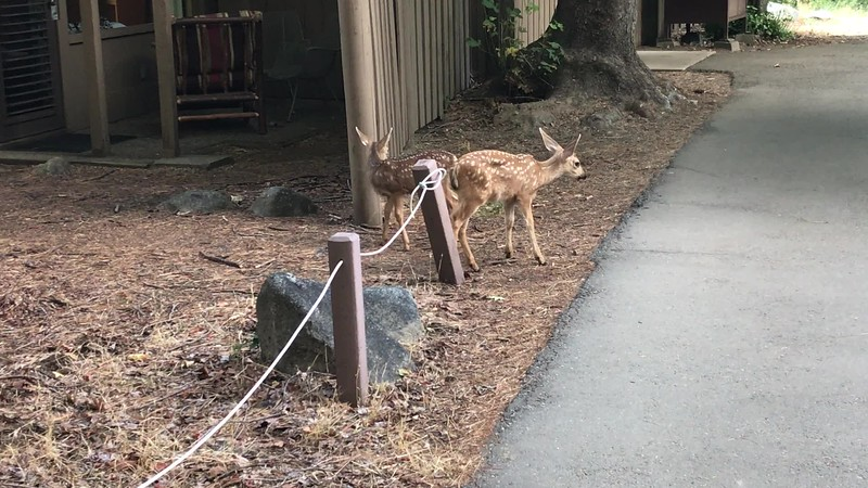 pbm7-2019-Yosemite-2.MOV