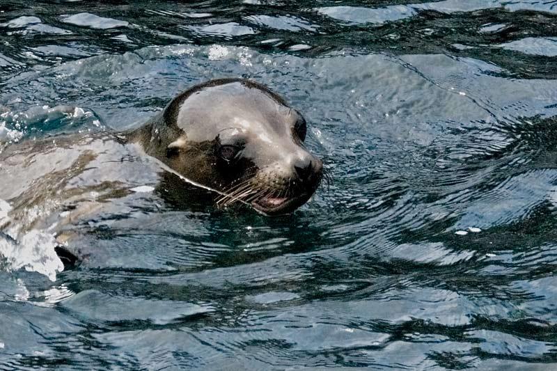 sealheadwater.jpg