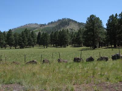 White Horse Hills & Hochderffer Hills HPs - Aug. 8, 2009