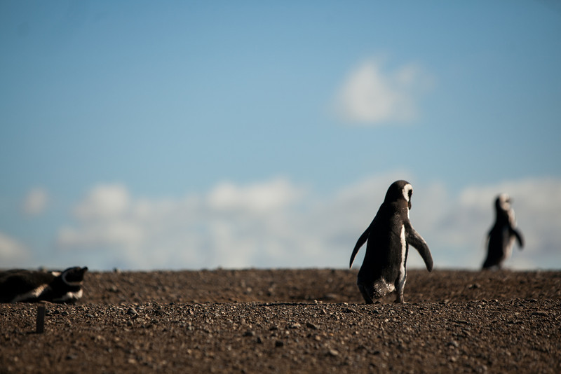 patagonia-1031.jpg
