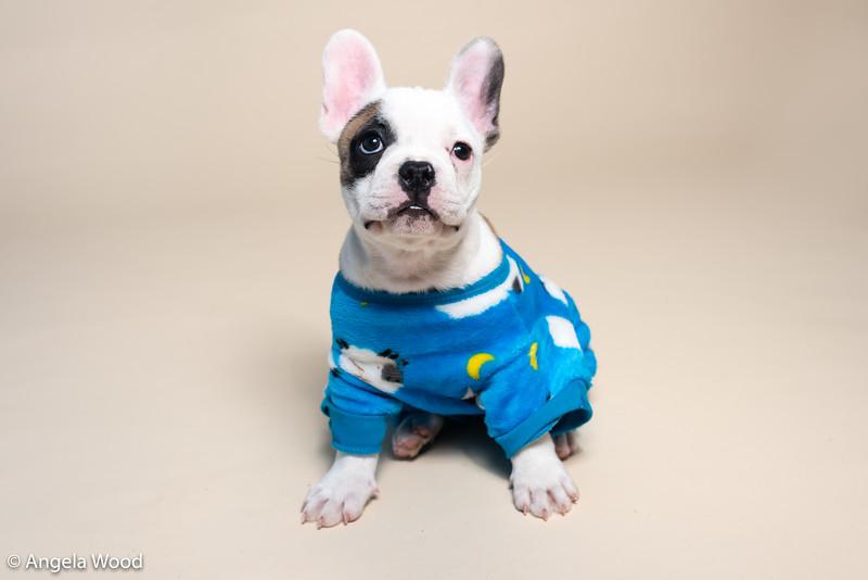 Puppies56.jpg