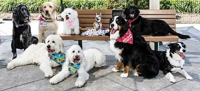 Marin Humane Society