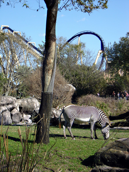 While on Choir Tour the students visited Busch Gardens known for roller coasters and safari animals.