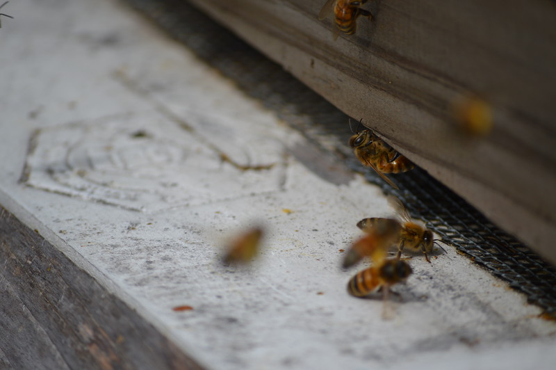 2016-03-12_Bees_002.JPG