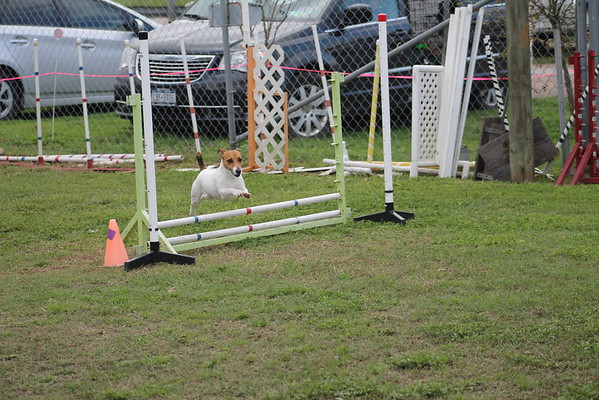 2015 March CPE Agility Trial