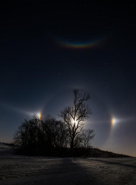 moon dogs 1 (1 of 1).jpg