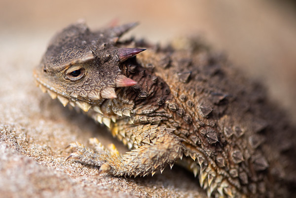Herpetology- Reptiles and Amphibians