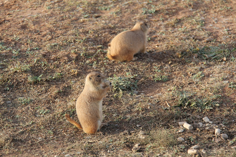 20171120-009 - Texas - Caprock Canyons SP - Prarie Dog Town.JPG
