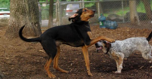 JULY 2 resize::Lulu, Sammy (hounds)