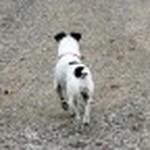 farley pups 002-2.jpg