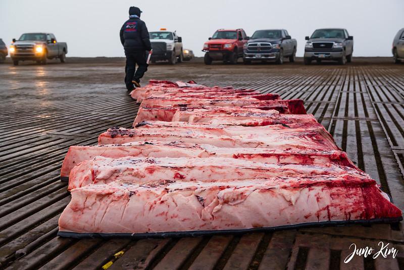Utqiagvik Whaling-6105100-Juno Kim.jpg
