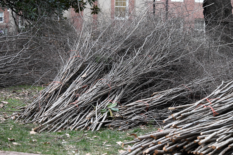 Bundles of sticks await their inclusion into the Patrick Dougherty art installation on the Davidson campus.