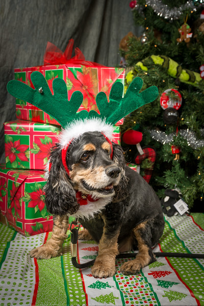 Ottawa Dog Rescue Christmas Photos
