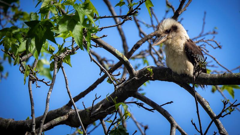 012419  birds  .JPG