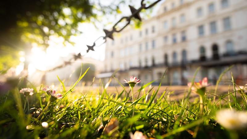 Brighton and Hove gardens