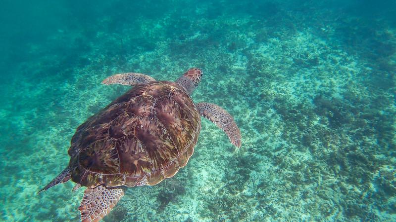 Sea Turtles (2 of 5).jpg