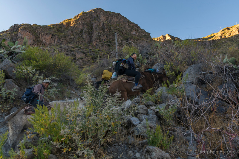 Colca Canyon-1364.jpg