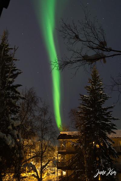 03.2021_Fairbanks__DSC2931-Juno Kim-2000.jpg