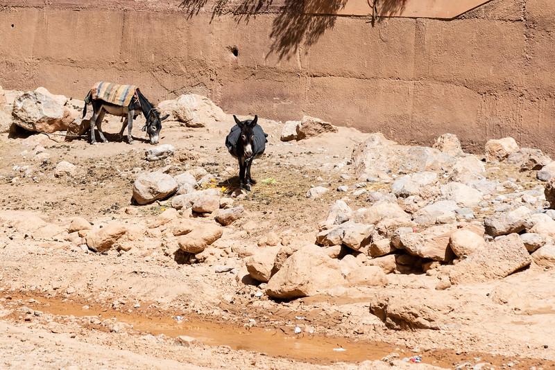 Marruecos-_MM10997.jpg