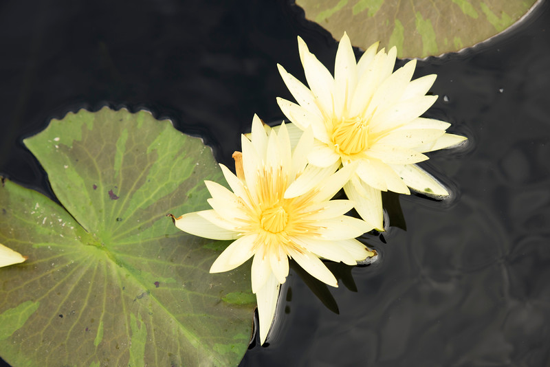 Chicago Botanic Garden 047.jpg