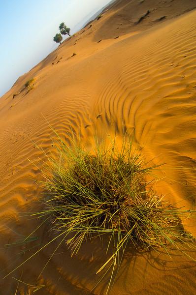 Oman-Wahiba Sands-8012.jpg