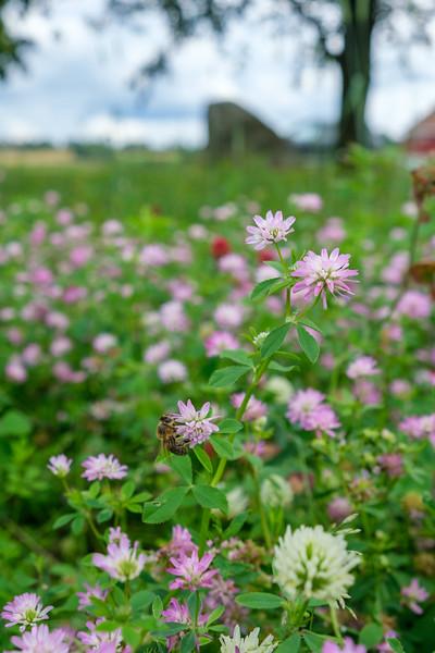 Kantsone for pollinerende insekter