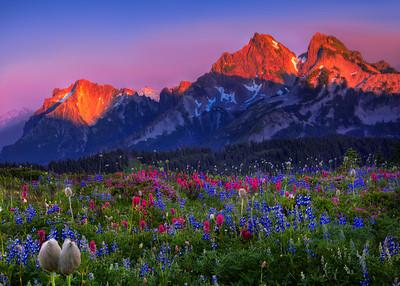 Mountain Blooms