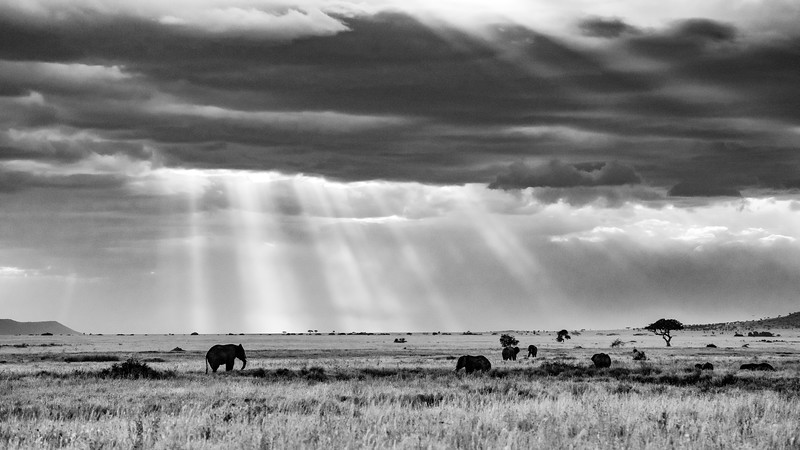 Blessing-from-heaven-elephants-Serengeti-3.jpg