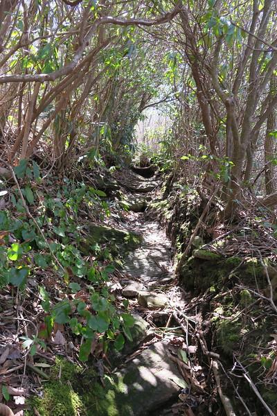 High Bethel Trail - 4,465'