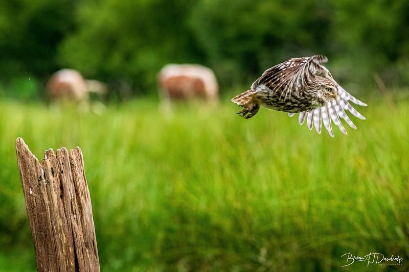 The Little Owl Shoot-6874.jpg