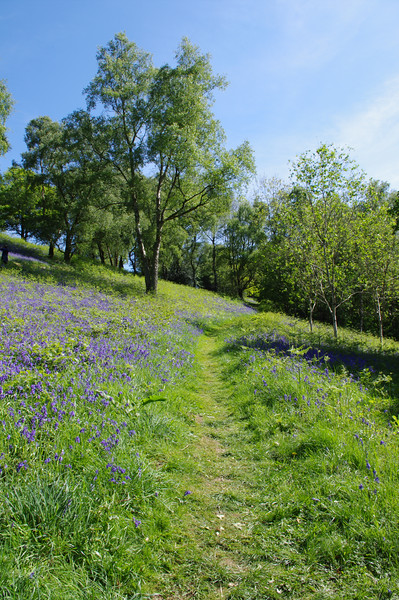 Hillside bluebell path, Malvern.jpg