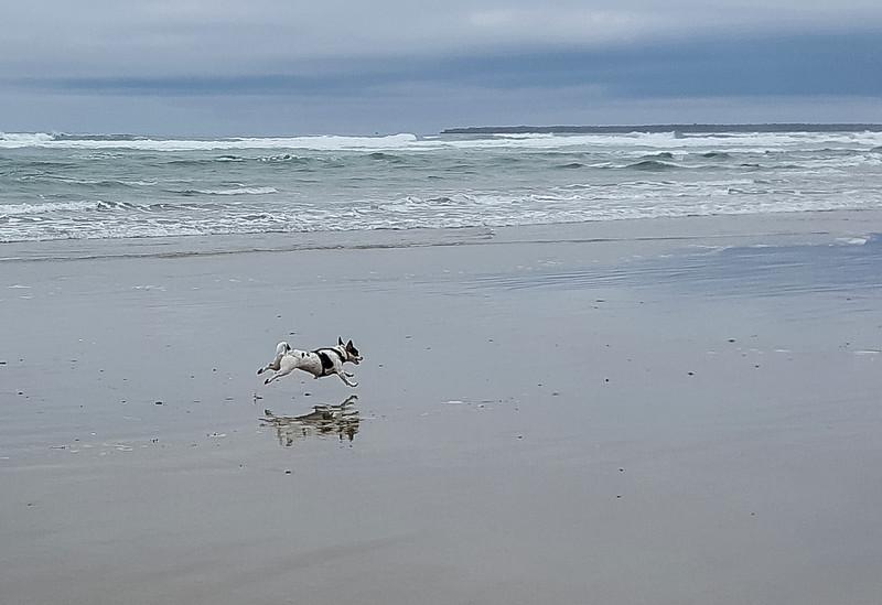 Beach walk with Mattie (19 of 20).jpg