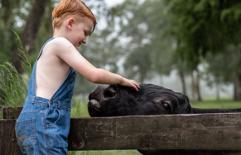 Anderson Lochlan sin cow.jpg