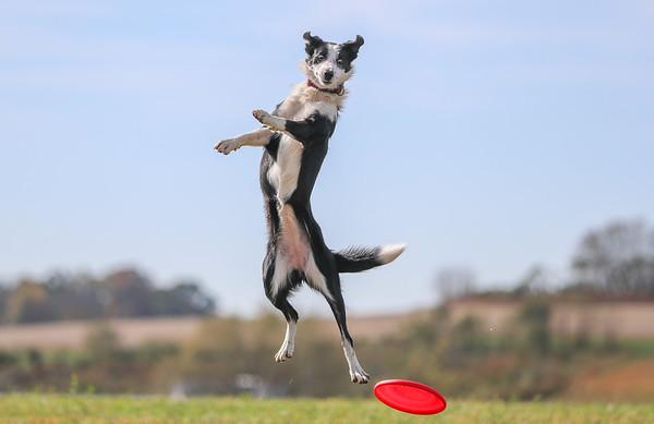 Appalachian Air Canines