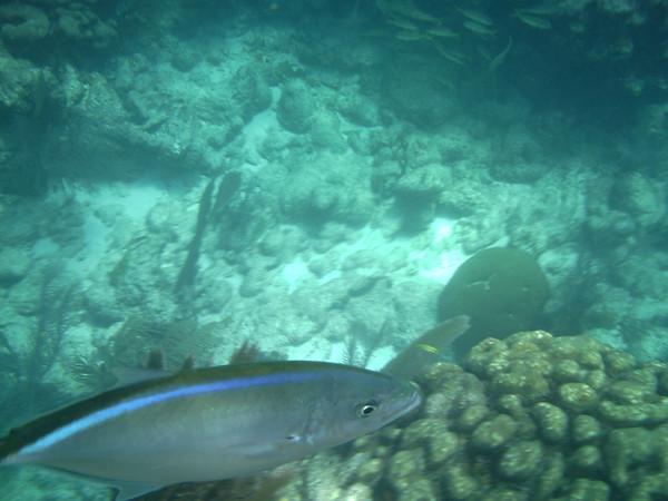 2013-06-25 Underwater Pictures