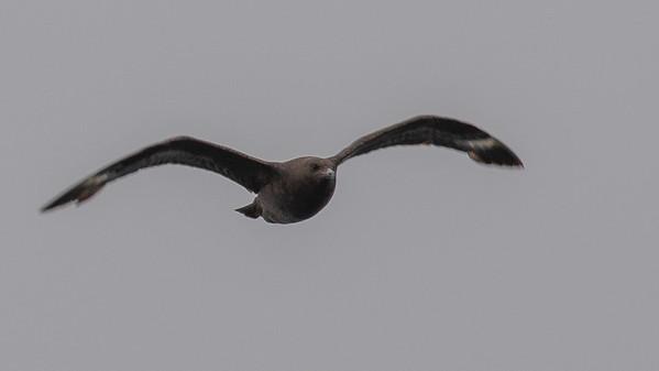 Santa Cruz County Bird Image Library