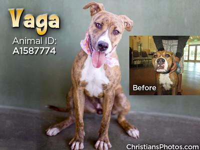 Saving Pets Through Photography