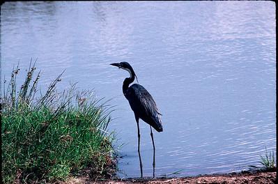 Kenya 1996