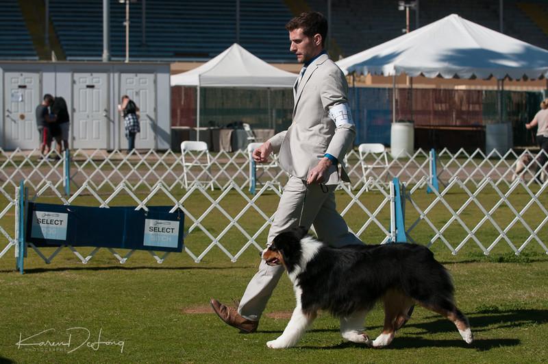 20170205_Australian Shepherds_Lost Dutchman Kennel Club-134.jpg