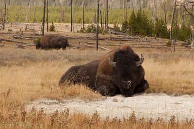 2012 Yellowstone Trip