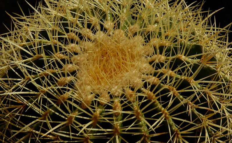 _DSC4294_Bordum_kaktus.jpg