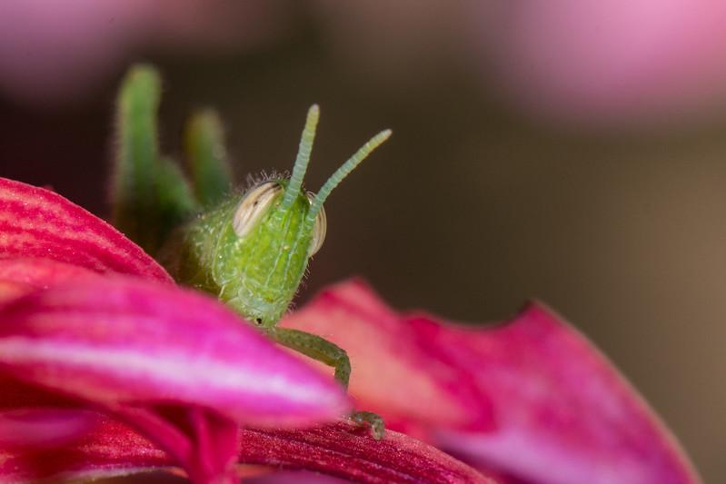 Grasshopper 1-2.jpg