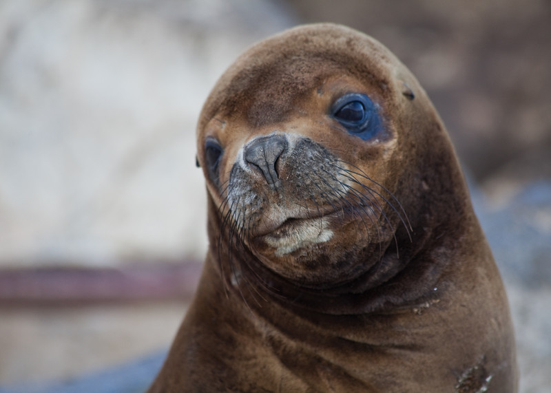 Sea lion colony in Beagle channel