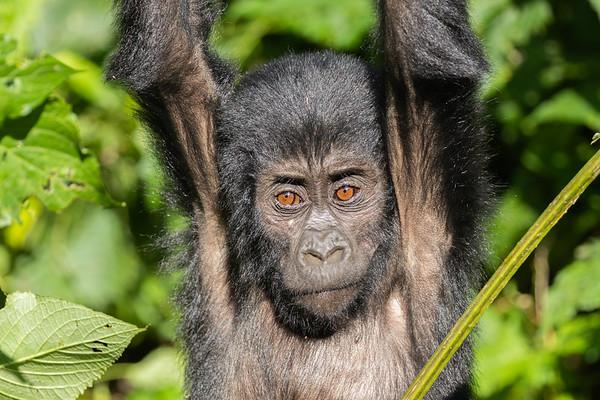 Uganda - Bwindi National Park