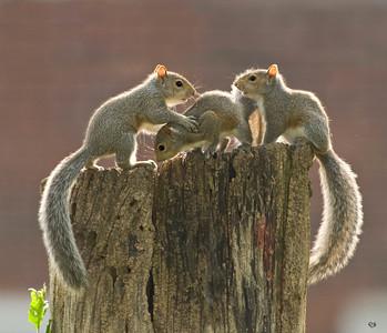 Squirrel Calendar 2010