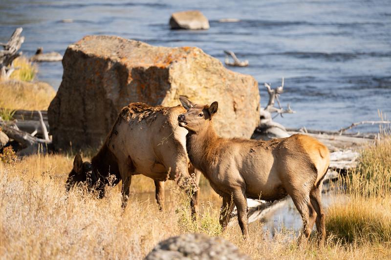 Yellowstone-7.jpg