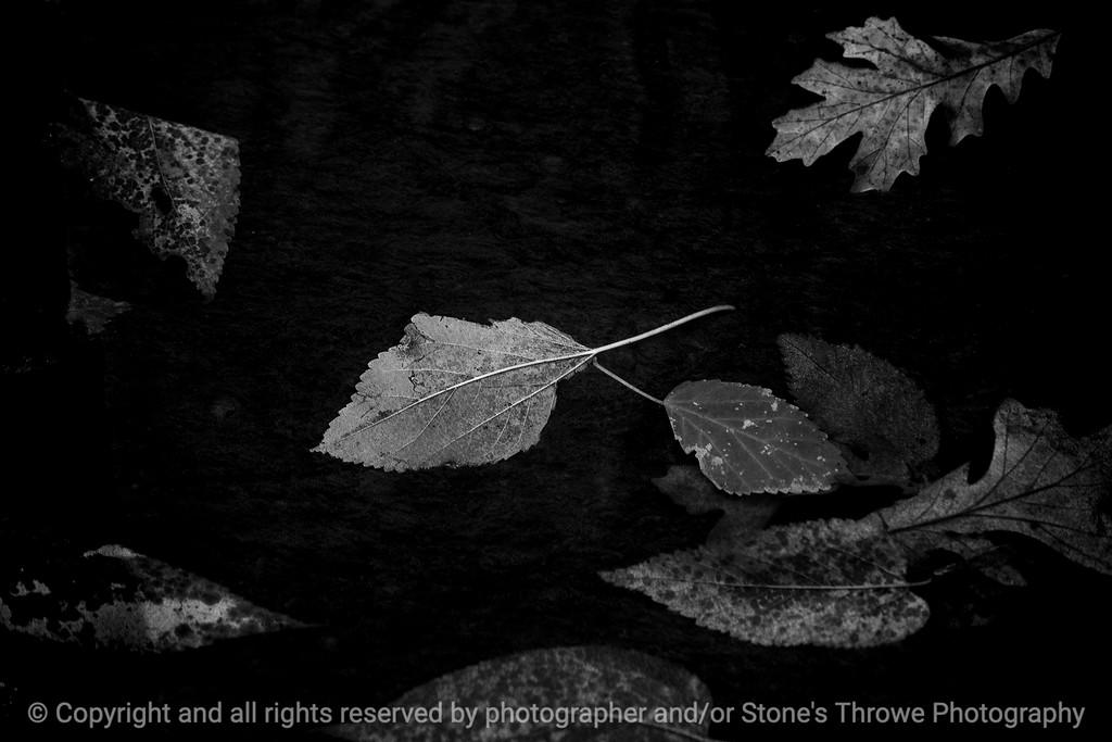 015-leaves-wdsm-02nov14-18x12-003bw-0500